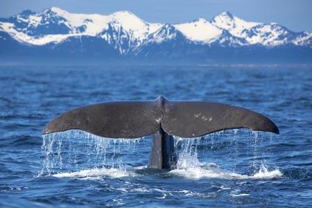 Исследование звуков морских млекопитающих